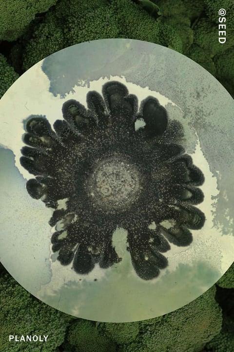Planoly-Blog-Post-Seed-Image-6-4