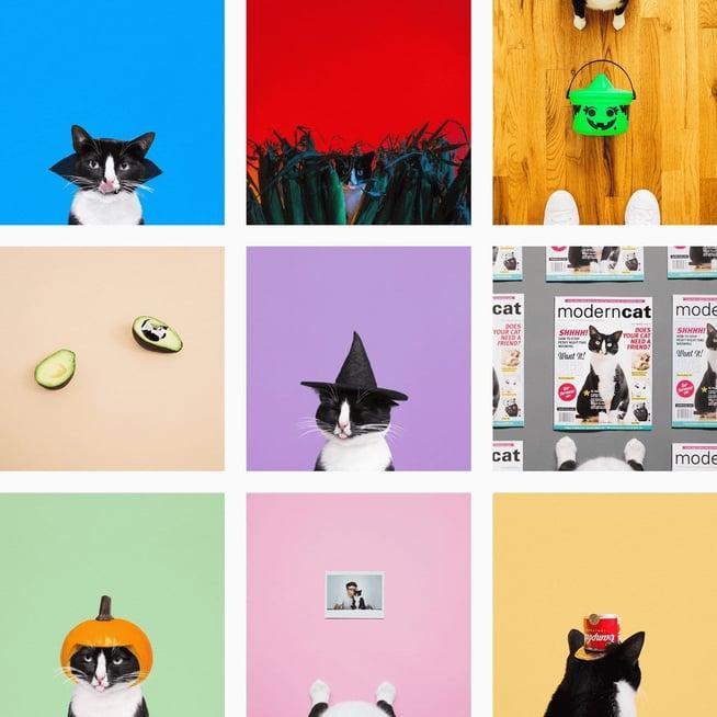 cats-instagram-planoly-blog-princesscheeto-2