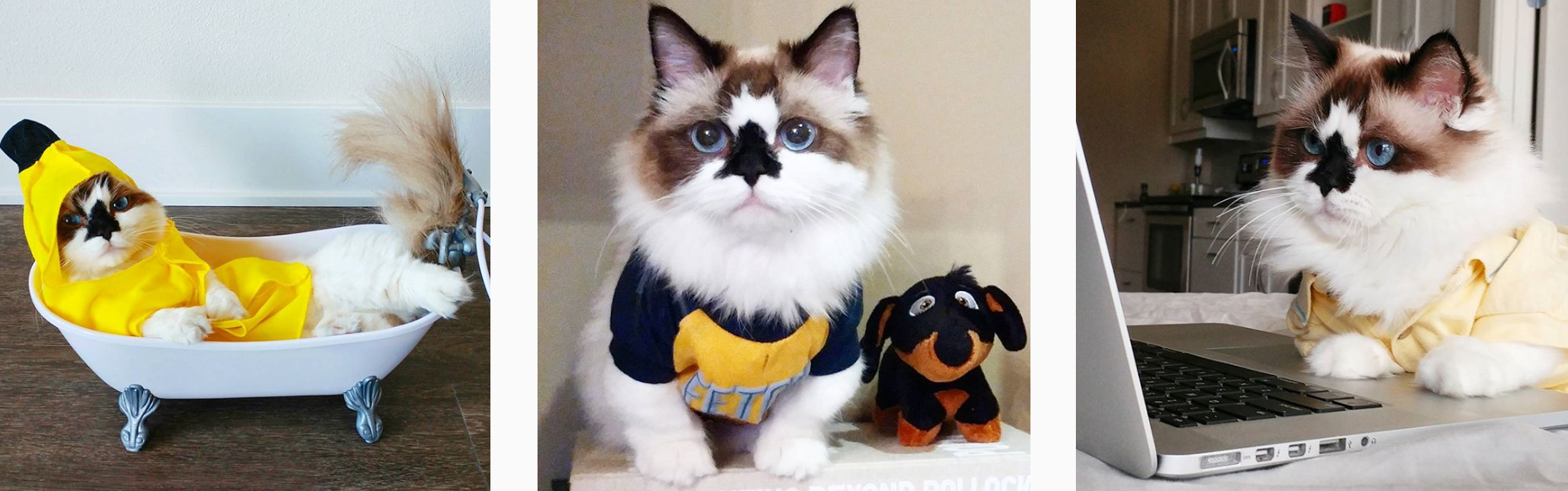Cats of Instagram - PLANOLY Blog - albertbabycat