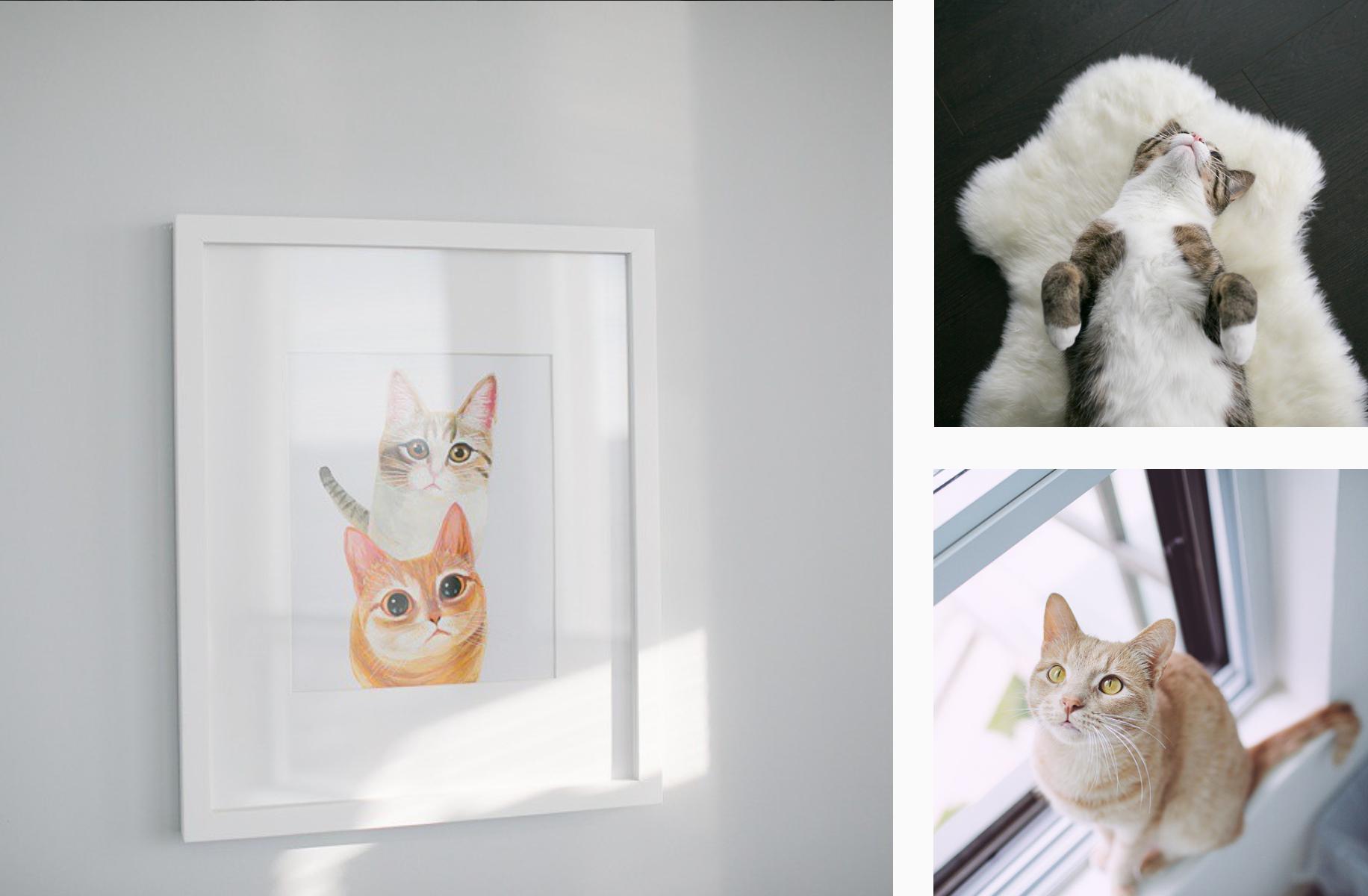 Cats of Instagram - PLANOLY Blog - momomilochub