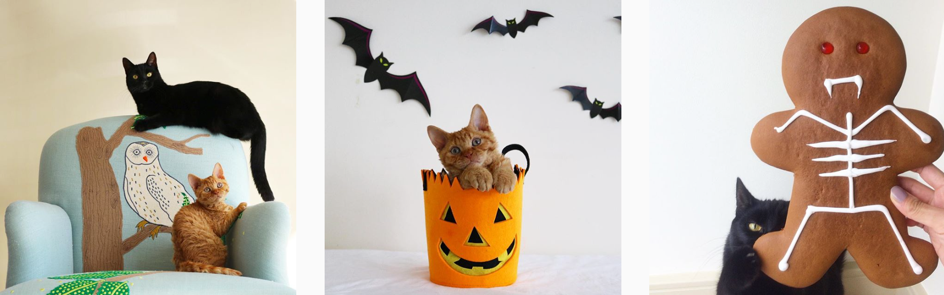 Cats of Instagram - PLANOLY Blog - rina takei