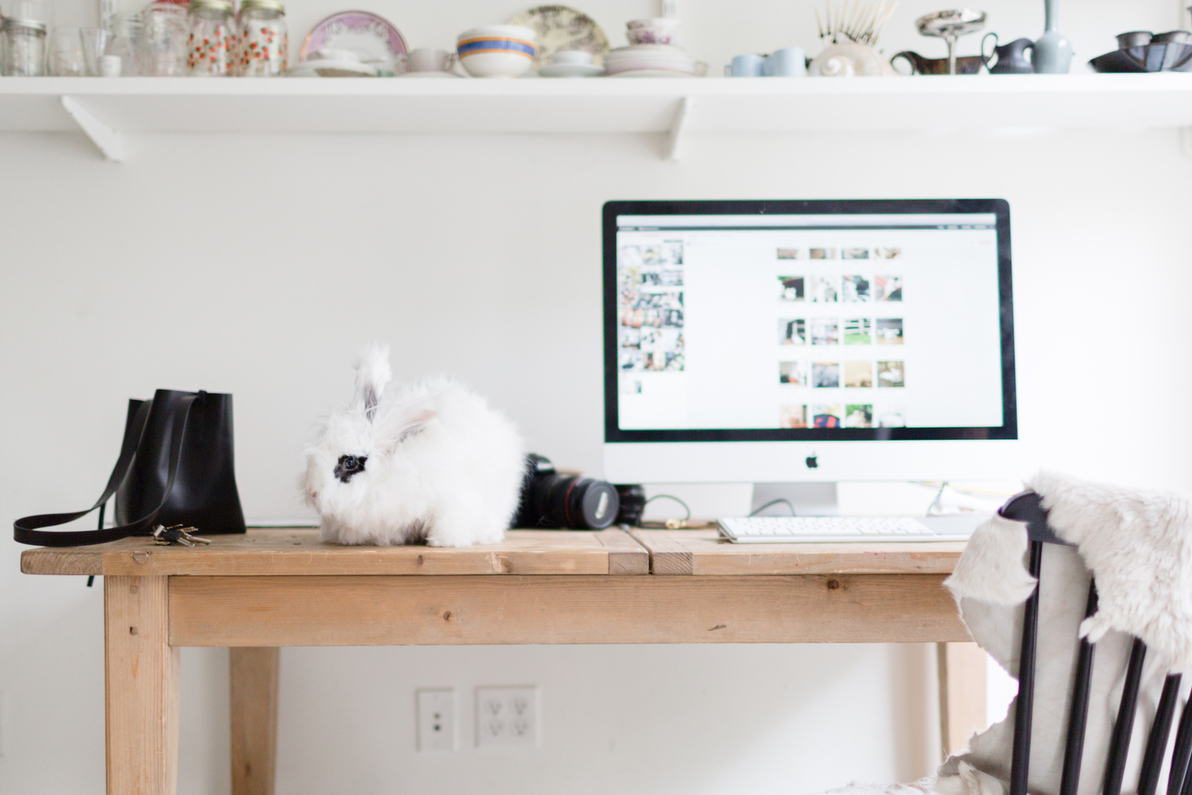 PlanoLeaders: Jewels of NY & Cleo the Bunny - PLANOLY Blog 6