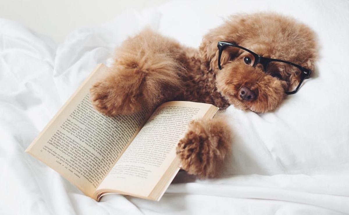 Happy National Dog Day - PLANOLY blog - ps.ny