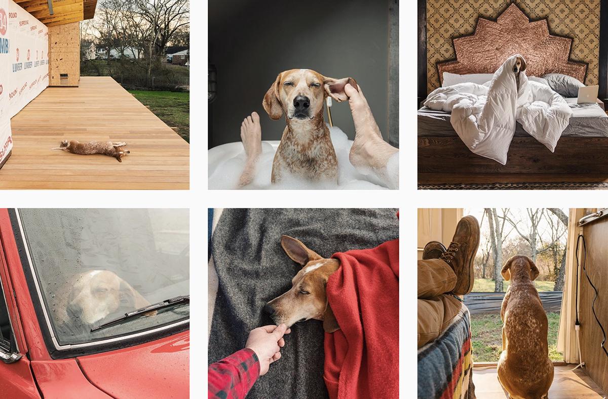 Happy National Dog Day - PLANOLY blog - thiswildidea